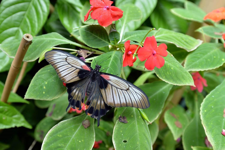 jardin-aux-papillons-morbihan-bretagne-sud-07 © Michel RENAC