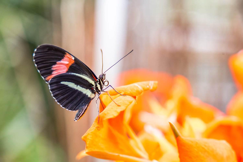 jardin-aux-papillons-morbihan-bretagne-sud-27 © © Magalie BARRE