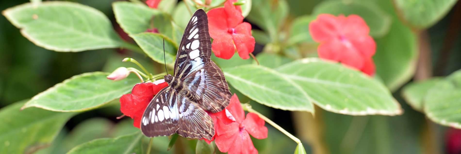jardin-aux-papillons-morbihan-bretagne-sud-17 © Michel RENAC