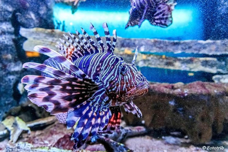 Aquarium-de-Vannes-Morbihan-Bretagne-Sud © Aquarium-de-Vannes