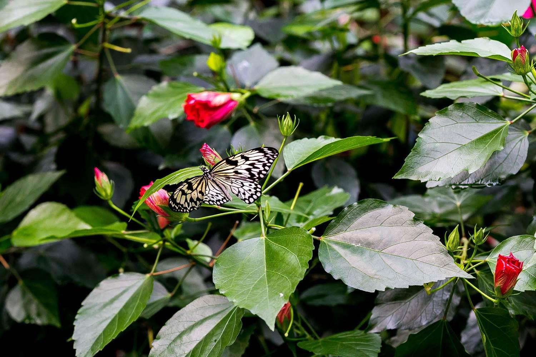 jardin-aux-papillons-morbihan-bretagne-sud-37 © Meero