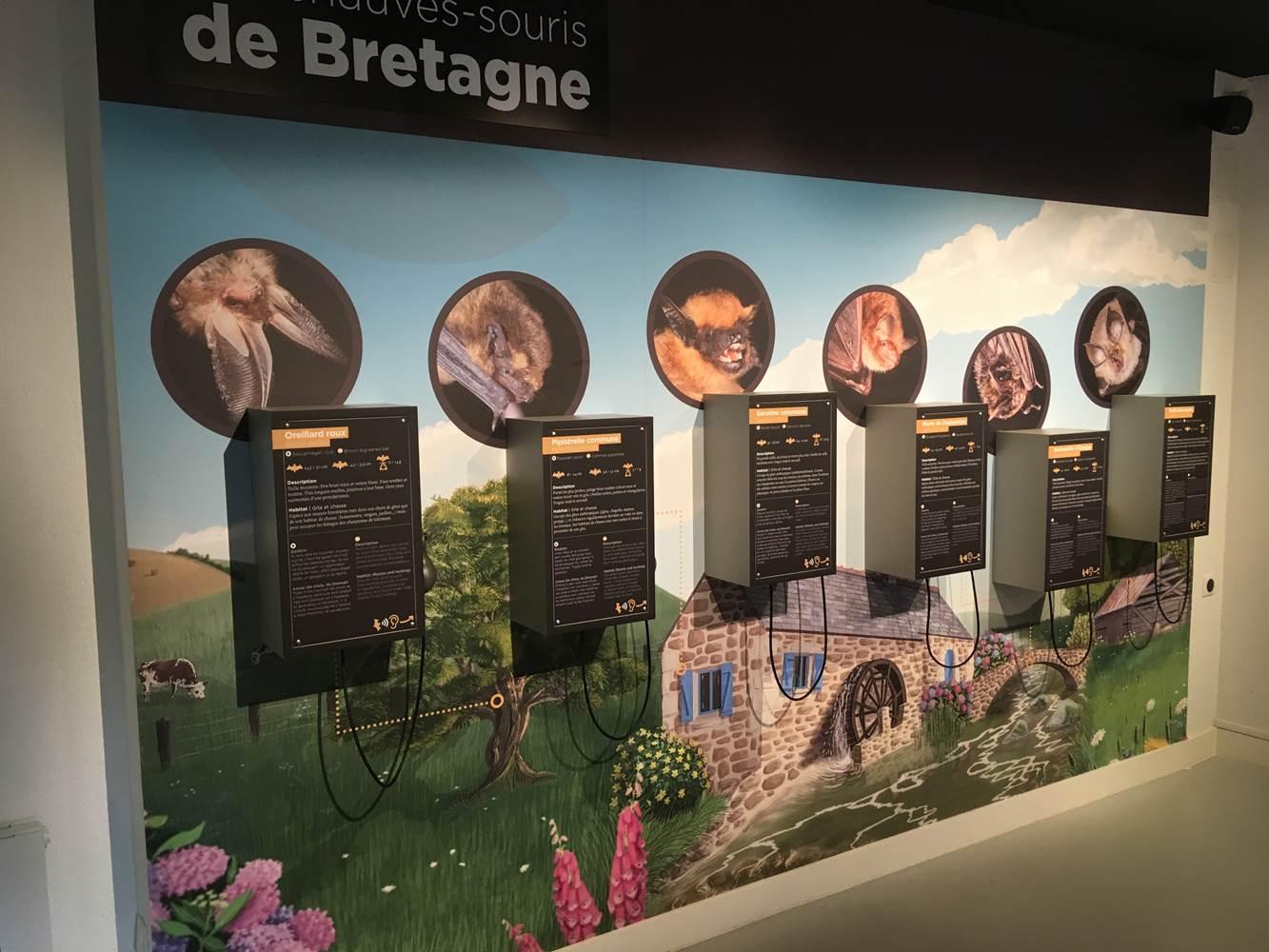 Les chauves-souris de Bretagne ©