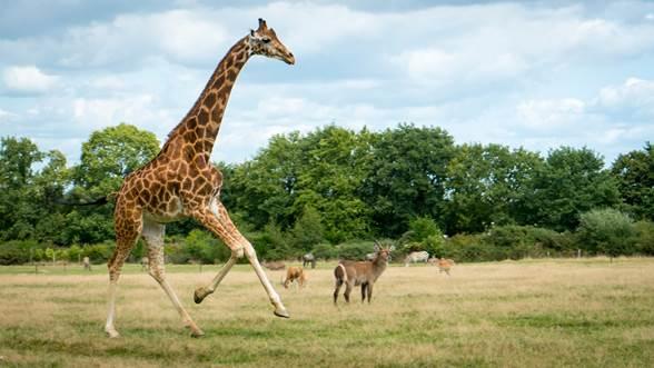 Parc animalier & botanique et Parcabout®  de Branféré