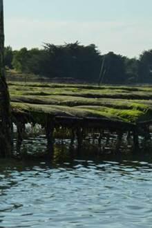 A la découverte des parcs à huîtres avec Sentiers marins