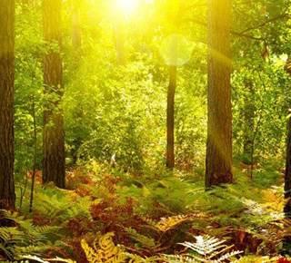 Séjour Nature et Magie en Brocéliande