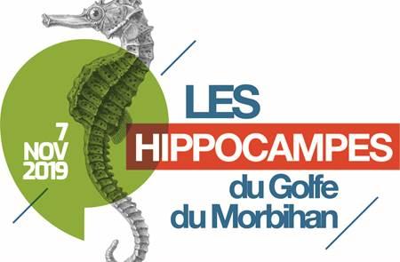 Les Hippocampes du Golfe du Morbihan