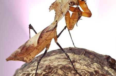 L'Insectarium de Lizio