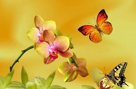 Orchidées et papillons de l'Hippodrome Cano