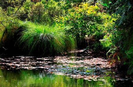 Randonnée nature dans les Marais du Roho