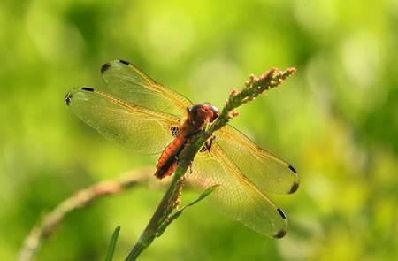 Sortie découverte papillons, libellules et autres petites bêtes