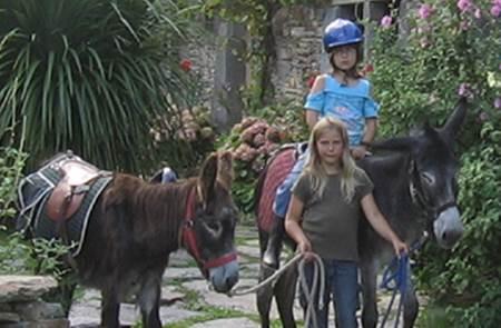 Les Anes du Tay -  balade avec des ânes